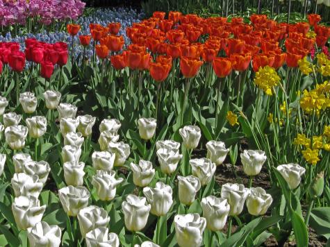 VanDusen Botanical Gardens, Vancouver Canada
